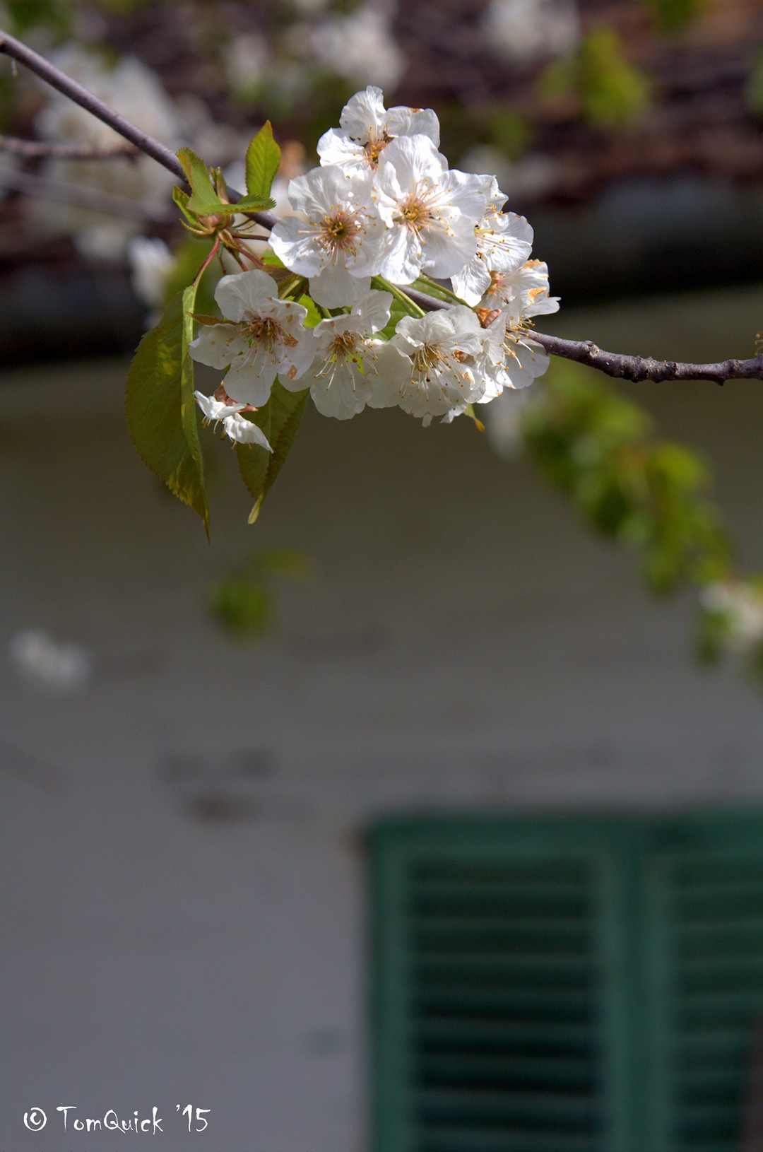 Tavaszka