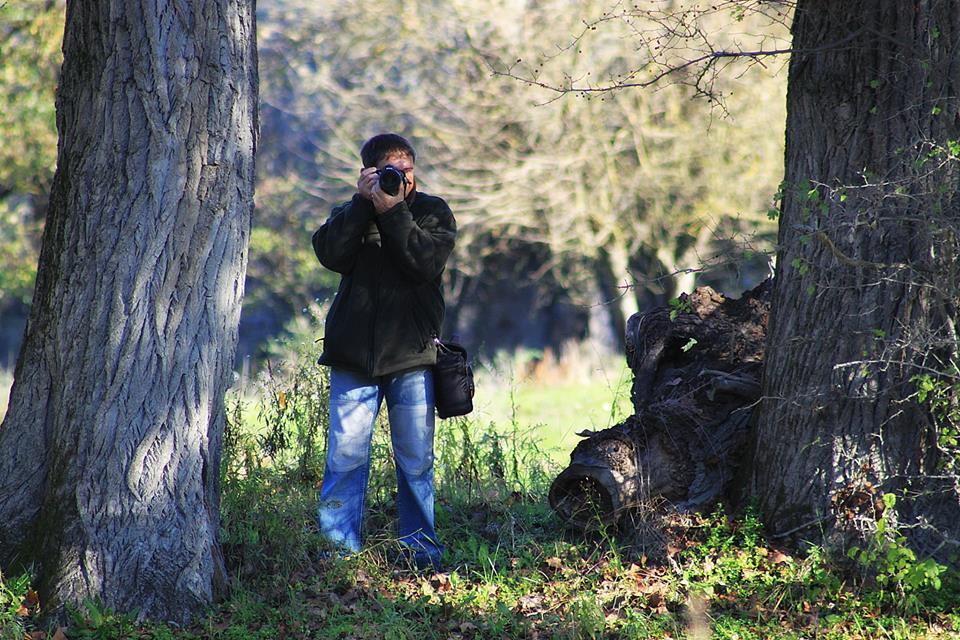 Bédai erdőben